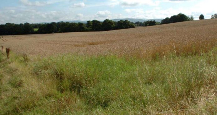 Land off Giantswood Lane, Congleton, that is subject to a planning proposal.