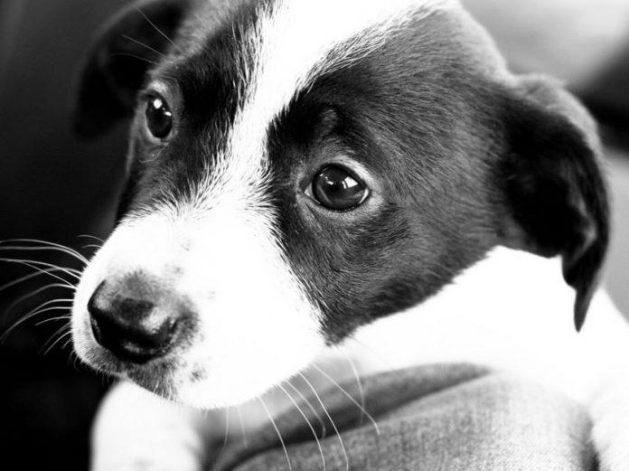 A puppy.