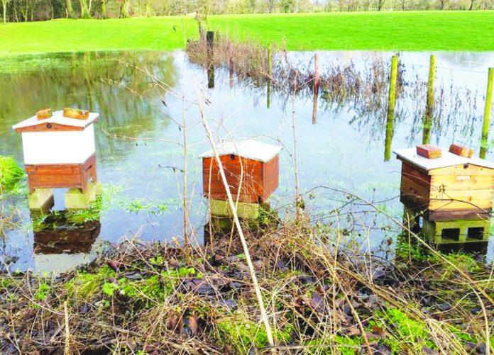 Beehives stolen from Clonter Opera, Swettenham.